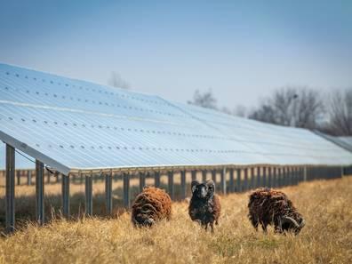 landwirtschafltiche Fläche kaufen, Photovoltaik, Schafe, Grünland, Foto: hykoe/fotolia.com