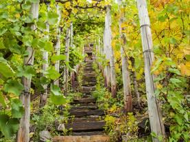 Weingut kaufen, Weinberg, Steilhang, Foto: iStock/Nachteule
