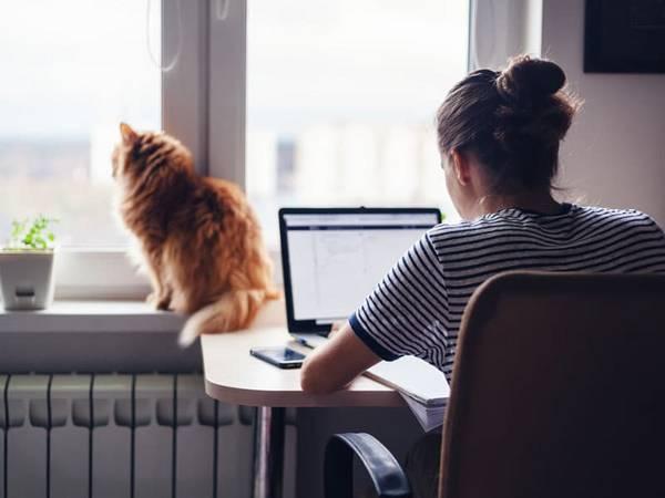 Immobilienbewertung, Online, Frau vor Computer, Katze am Fenster, Foto: olezzo/stock.adobe.com