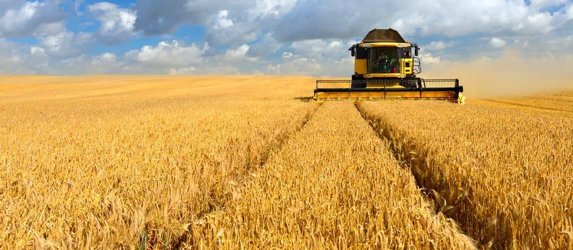 landwirtschaftliche Fläche kaufen, Feld, Acker, Foto: iStock/AVTG