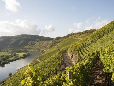 Weinberg, Lage Weinberg, Flussregion, Foto: iStock/AM-C