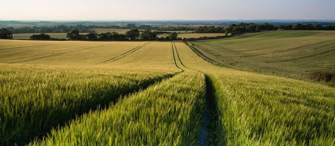 Landwirtschaftliche Fläche kaufen, Feld, Wiese, Foto: veneratio/fotolia.com