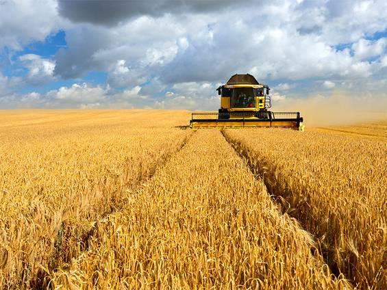 Gewerbegrundstück mieten, Gewerbegrundstück kaufen, Gewerbegrundstück pachten, Landwirtschaft, Foto: iStock/AVTG