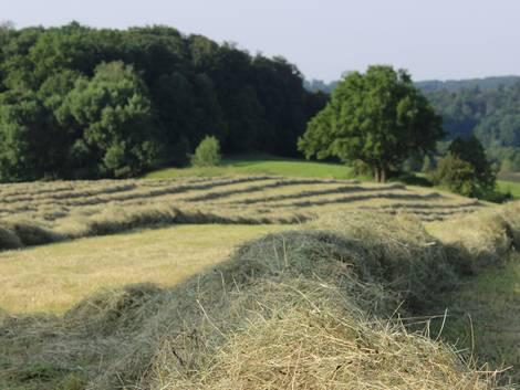 Landwirtschaft kaufen, Forstwirtschaft kaufen, Felder, Foto: calla8109/fotolia.com