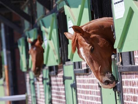 Landwirtschaft kaufen, Reitanlage, Pferdestall, Foto: Goodpics/fotolia.com