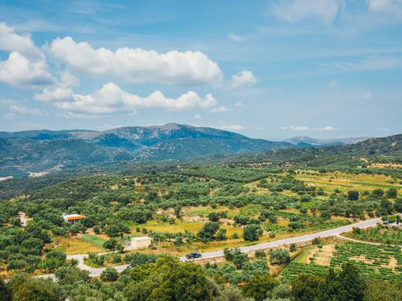 Immobilienkauf Griechenland, Auslandsimmobilien, Olivenfelder, Foto: dziewul/fotolia.com