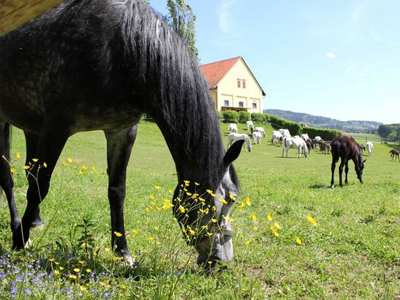 Reiterhof kaufen, Gruppenauslaufhaltung, Foto: rbkelle/fotolia.com
