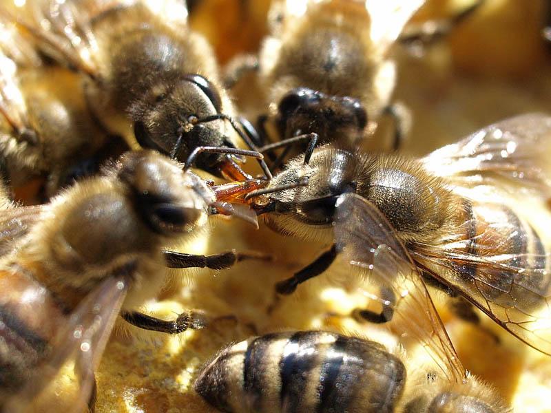 Bienennest Im Garten Infos Und Verhaltenstipps