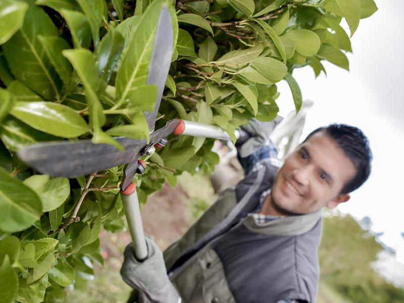 Grenzbepflanzung Fallobst Laubrente Streit Am Gartenzaun