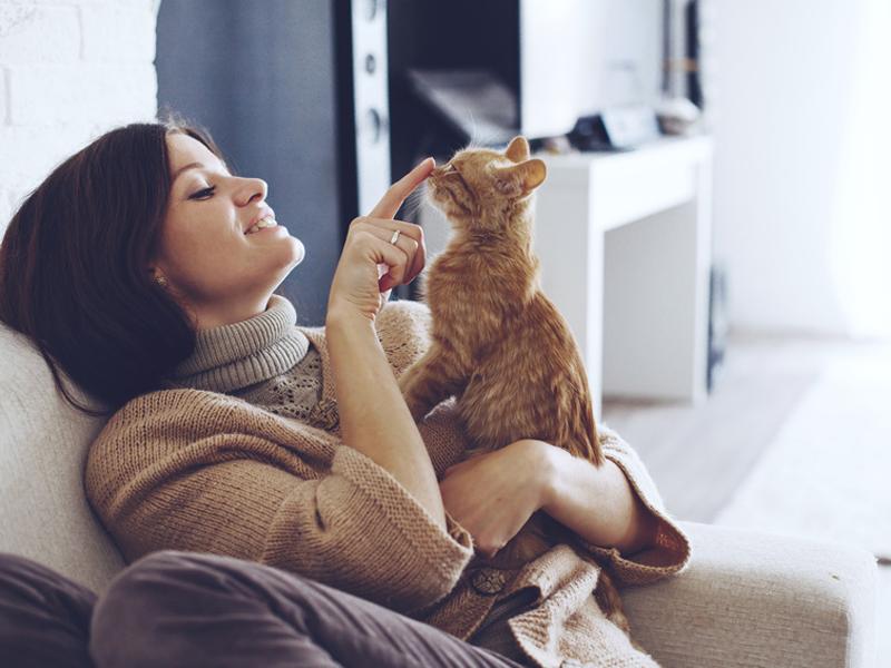 Haustierhaltung Hund Katze Maus In Der Mietwohnung